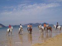骑马的经验教训沿着海滩上骑马课