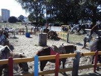 我们的小马和马在坎塔布里亚