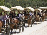Coches de caballos en el camino de Doñana
