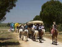 Camino rociero con caballos y carros