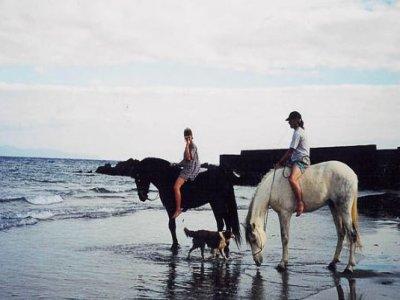 Ruta a caballo Icod de los Vinos. 8,5 horas