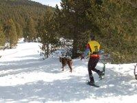 raquetas de nieve y perros