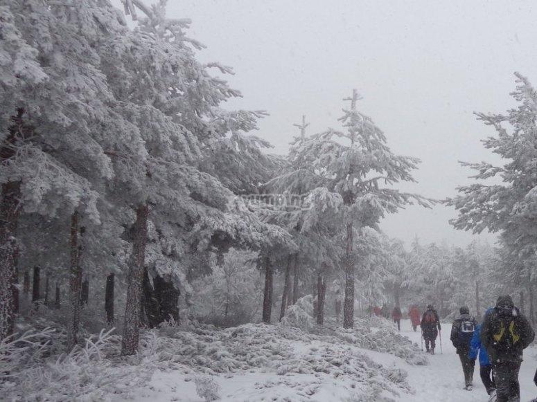 Con raquetas de nieve por Somosierra