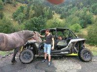 Animales durante las excursiones por andorra
