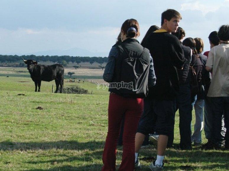 Visita del bestiame