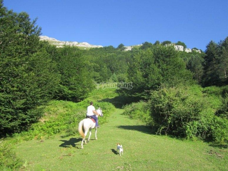 Paseando por verdes paisajes, a caballo