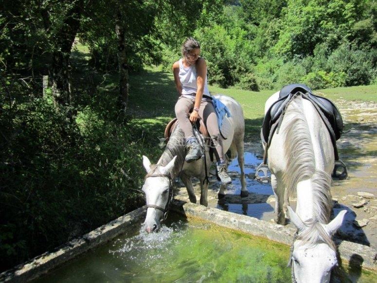 Una pausa para que los caballos se refresquen