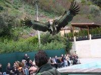 Exhibición Aves Arribes del Duero