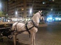 Paseos a caballo de noche
