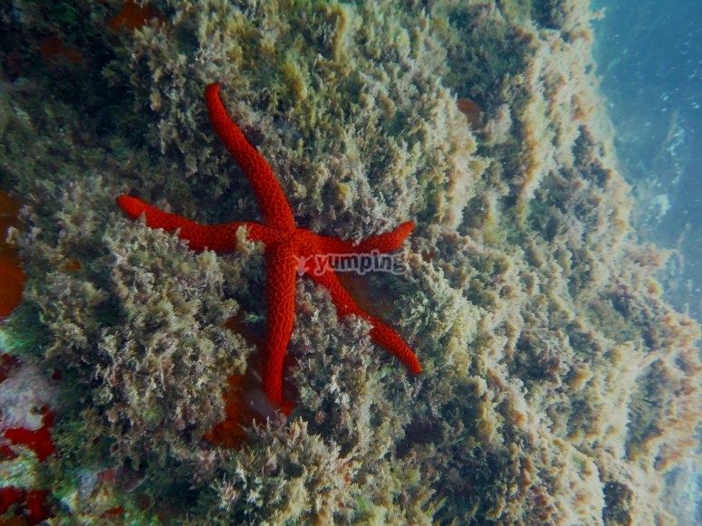 Fondo marino en la Costa Brava