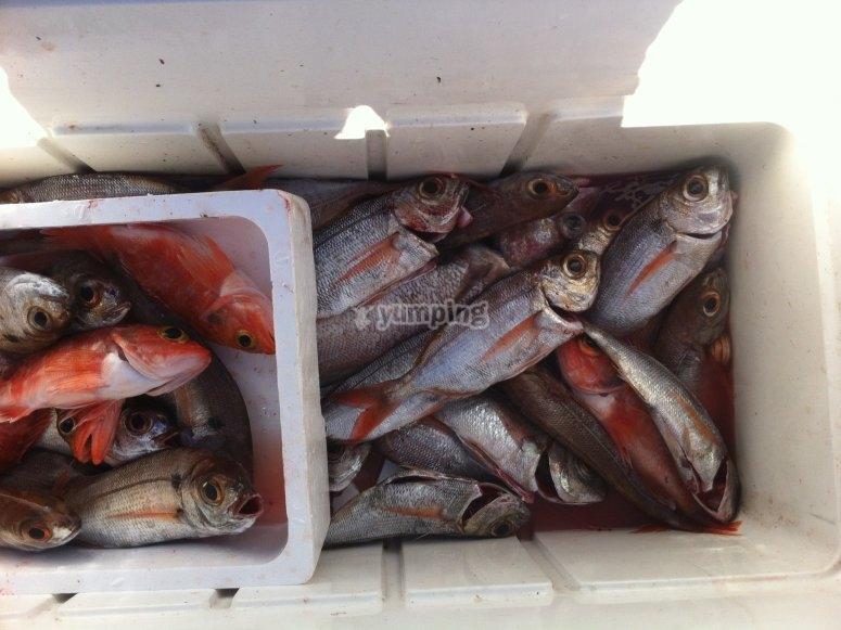 Pesca di fondo