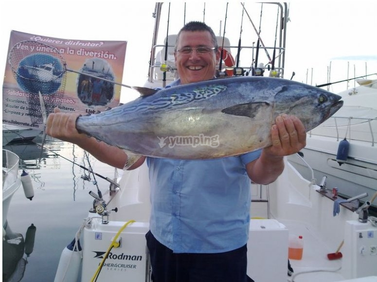tonno gigante