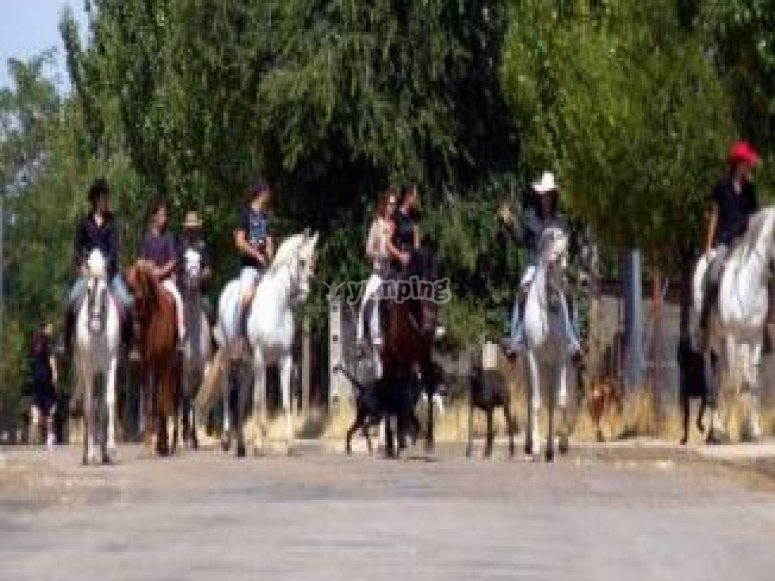 caballos en grajera