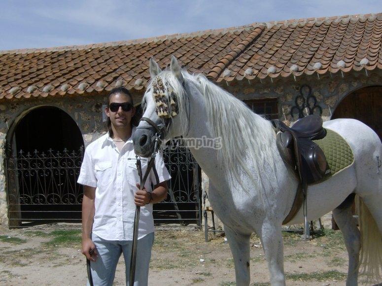 Controlando al caballo a pie