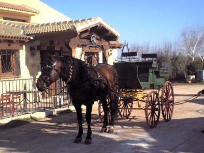 Carriage stroll + laser tag + lunch or dinner