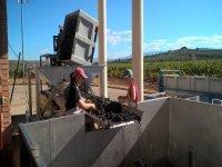 我们的葡萄酒制定过程