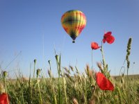 Balloon over a poppy field
