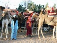 Fiestas tematicas con nuestros camellos