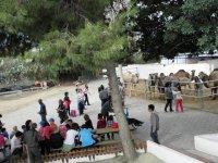 Granja de camellos en Almeria
