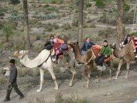 Paseo en camello por Almeria