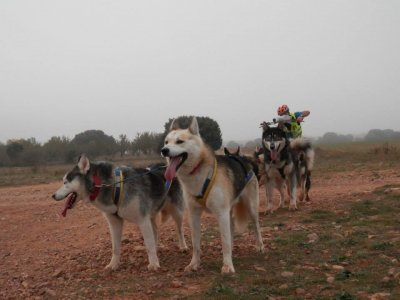 Club de Mushing Monegros