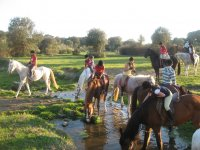 Horses drinking in the stream
