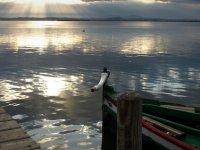 乘船游览Albufera +西班牙海鲜饭,6小时