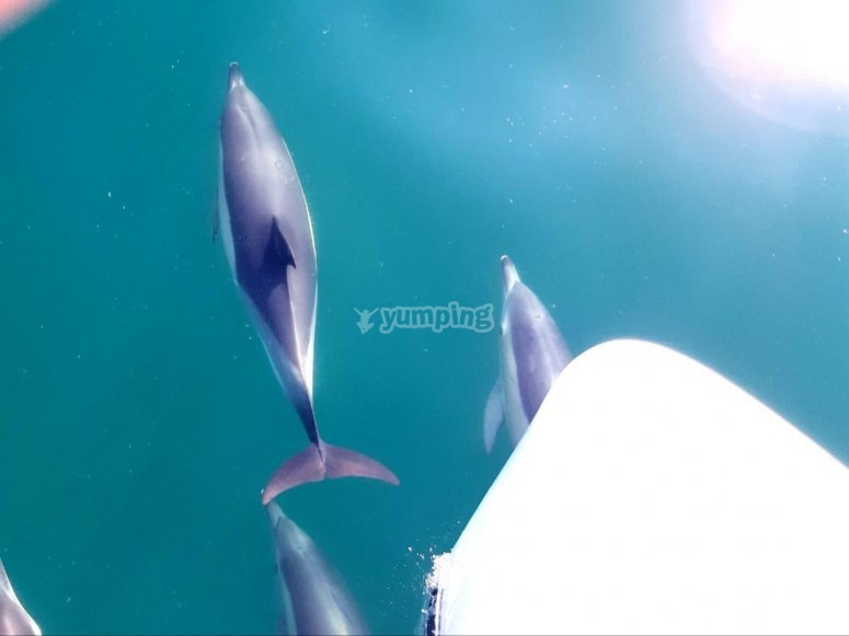 海豚在船头