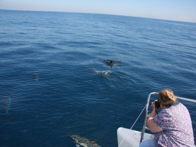 Dolphin Watching in Estepona