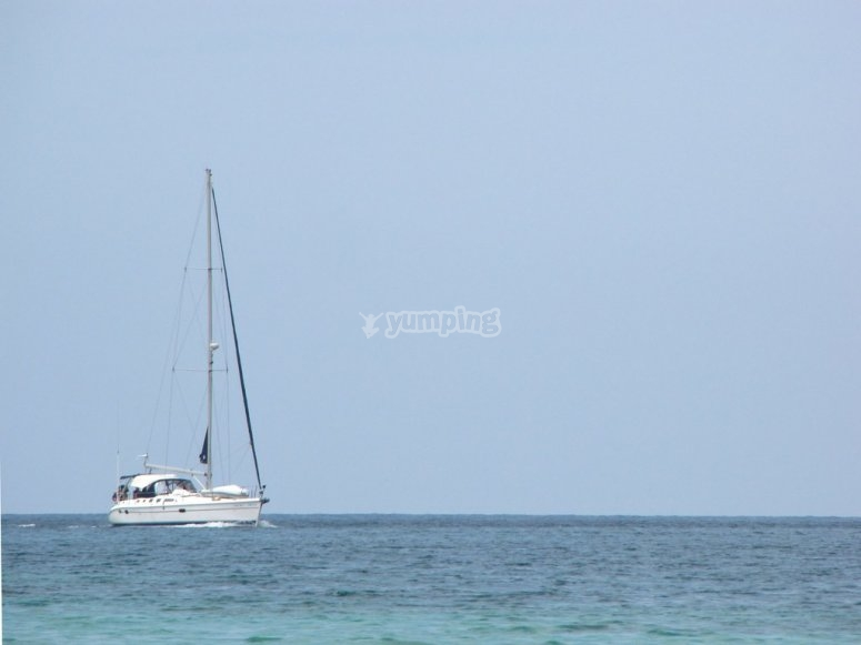 Salida en barco avistamiento cetáceos