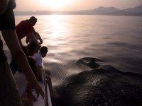 Avistamiento de delfines velero Marbella 2 horas