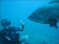 与石斑鱼相遇