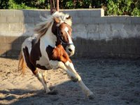 caballo en la pista