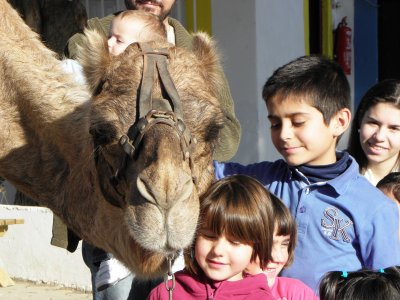 Camellos de Almería Parques Infantiles