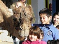 En la granja de los camellos