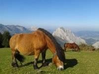 Viendo a caballos en libertad