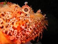 Observa las especies marinas más sorprendentes
