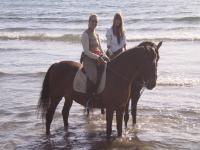 马骑马在海滩上