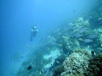 Alcanza el fondo del mar y explóralo