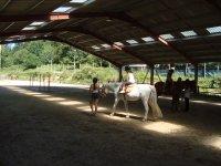 Salida con caballos