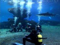 Buceando entre tiburones en el acquarium