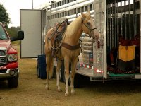 horse ready