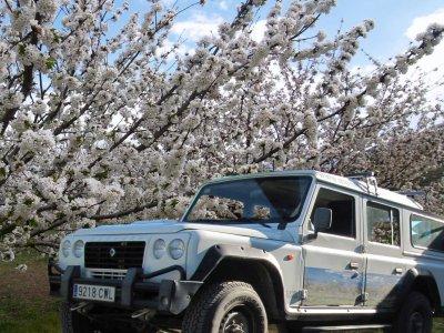 4x4 route Cherry Trees blossom Valle del Jerte 4h