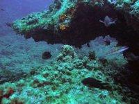 Descubre la flora marina