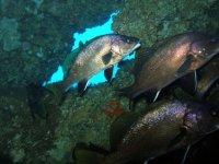 Buceo entre peces