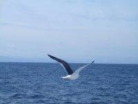 海鸥在我们航行时