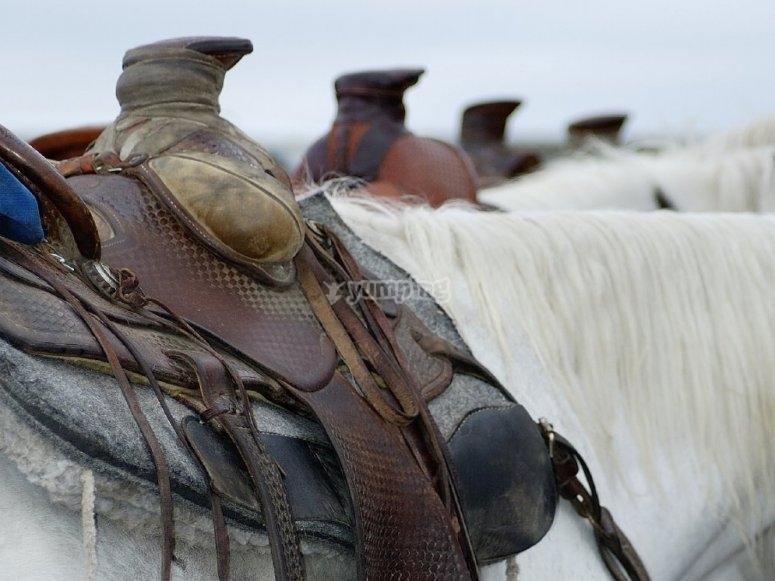 准备好路线的马鞍马