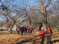 Walking through wooded areas