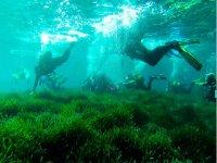Celebrando una despedida bajo el mar