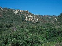 Descubre todos los secretos del Parque Natural de los Alcornocales